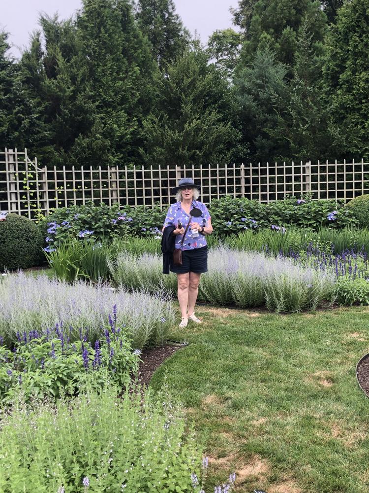 blue garden visitor